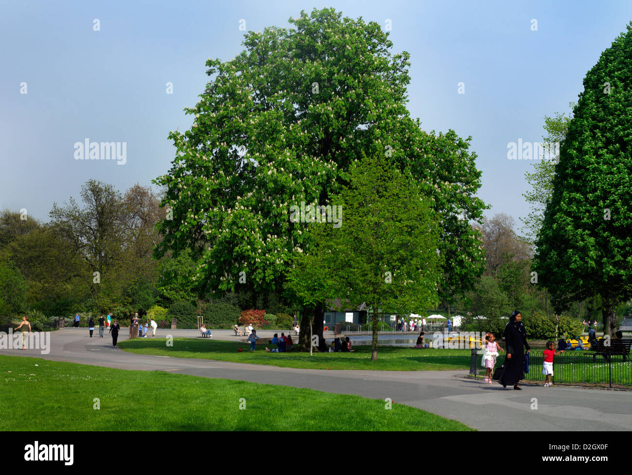 Regents Park London England Chestnut Tree in Bloom and Muslim Family - Stock Image