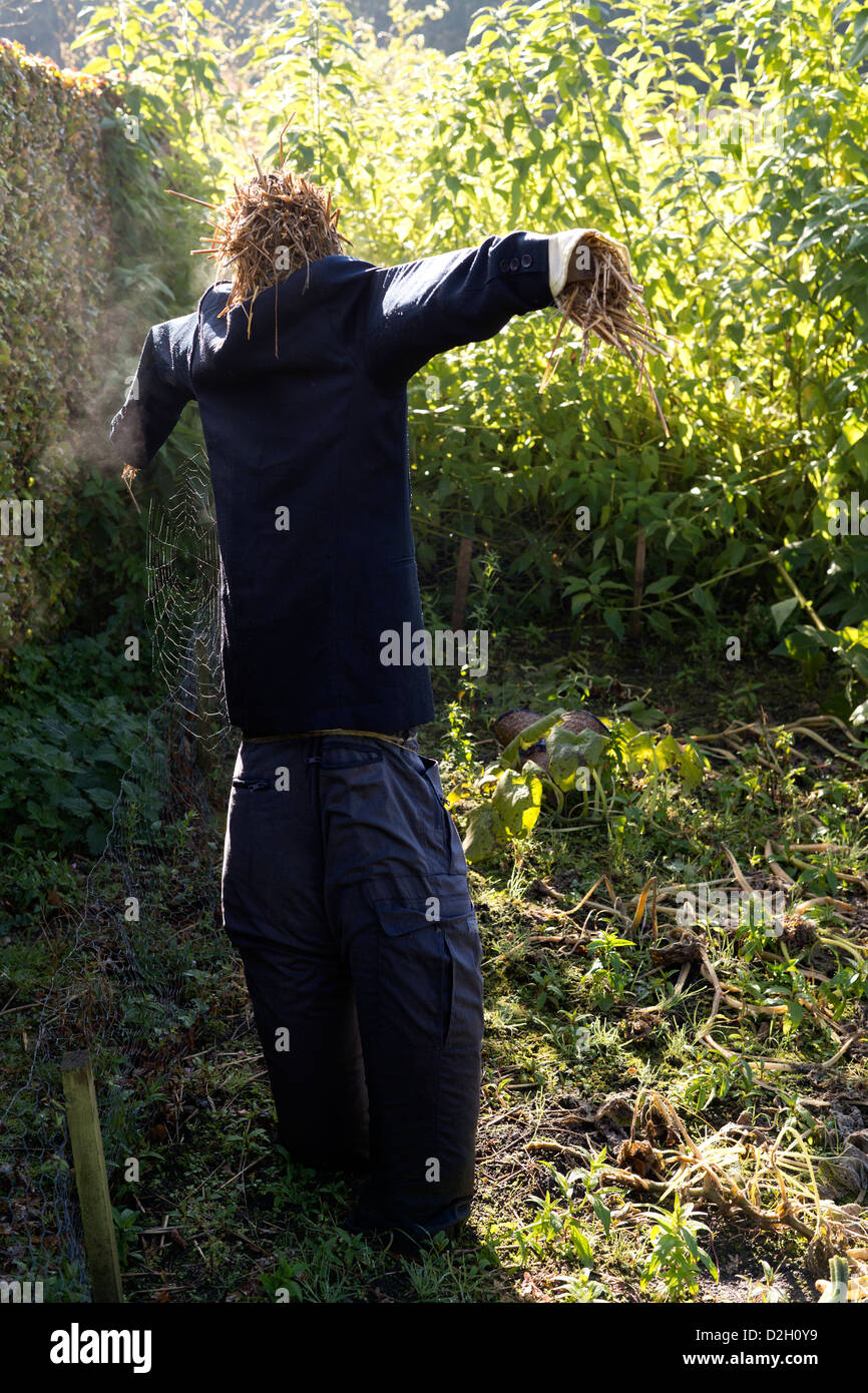 Scarecrow with spider's web - Stock Image