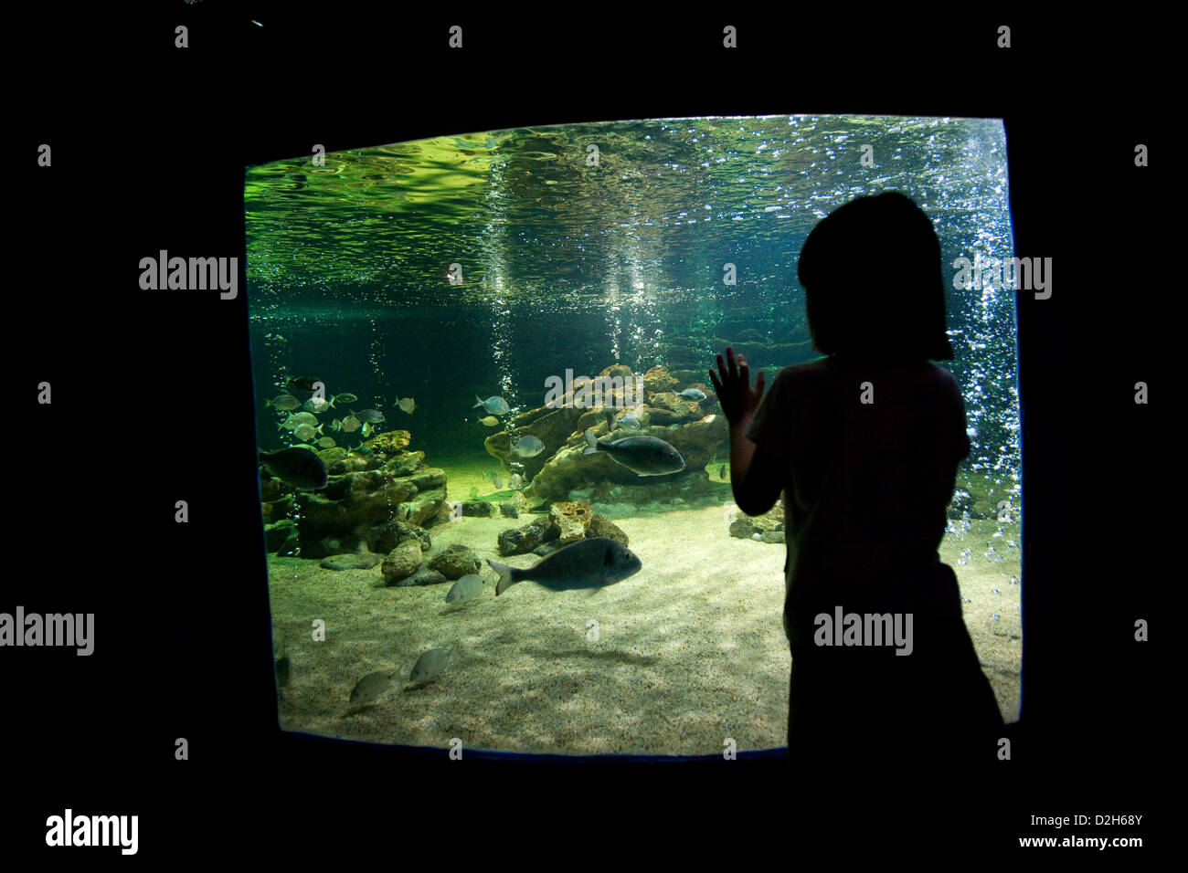 Albufeira, Portugal, a child in front of the Aquarium Zoo Marine Stock Photo