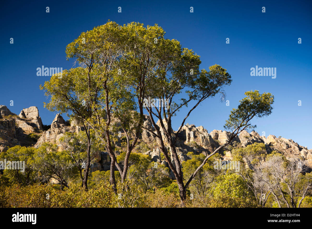 Madagascar, Parc National de l'Isalo, green trees growing on central plateau Stock Photo
