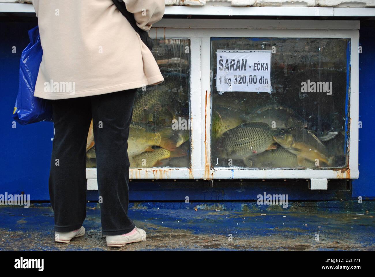Angler fish eating stock photos angler fish eating stock for Angler fish for sale