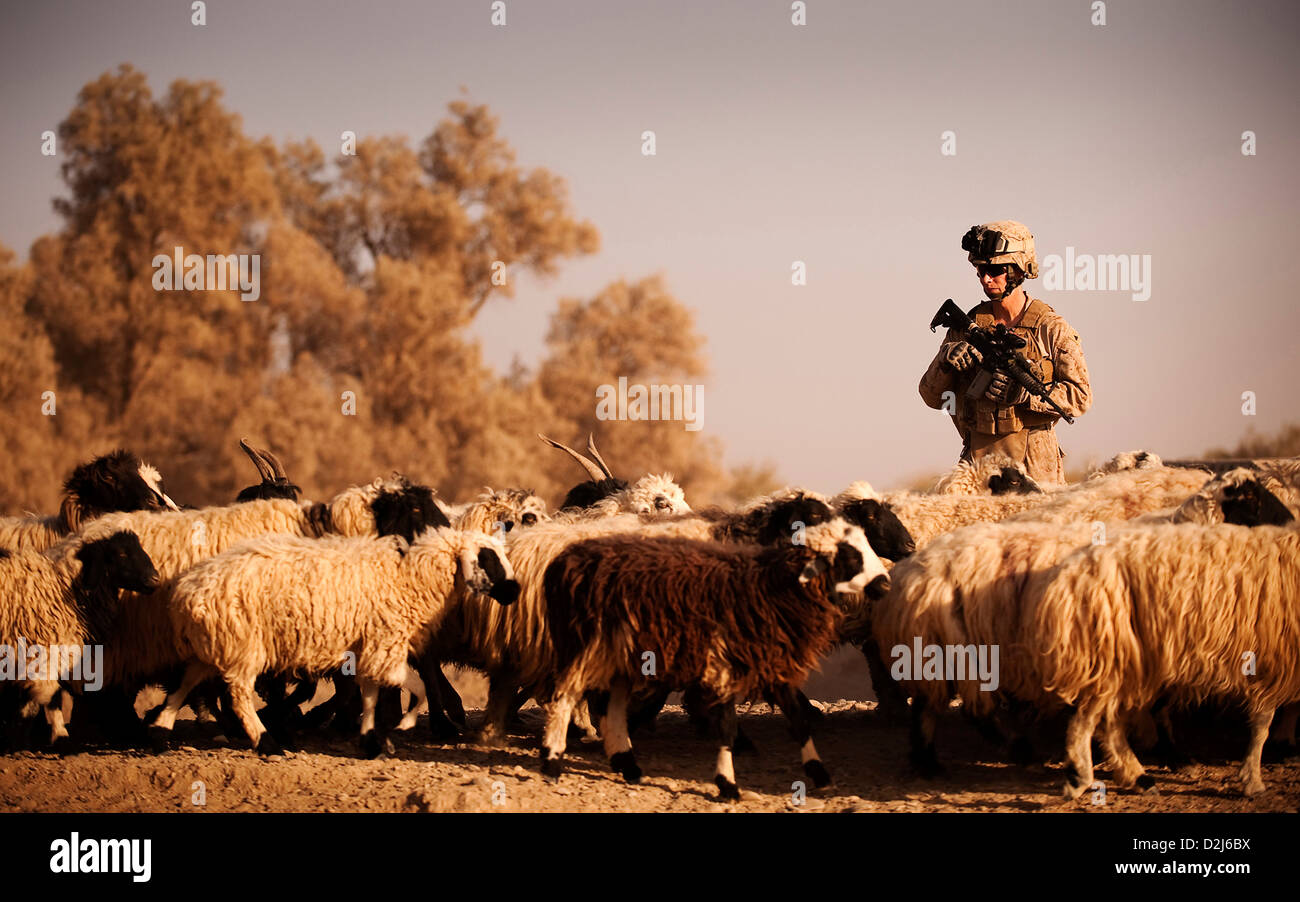 A US Marine yields the right of way to an Afghan farmers passing sheep herd while providing security in Nawa, Afghanistan Stock Photo