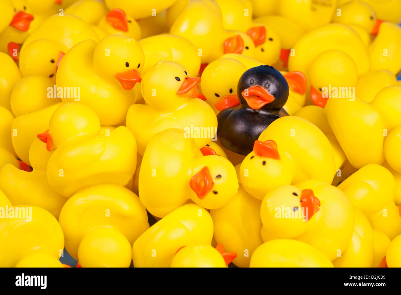 Black rubber duck in a mass of yellow rubber ducks Stock Photo ...