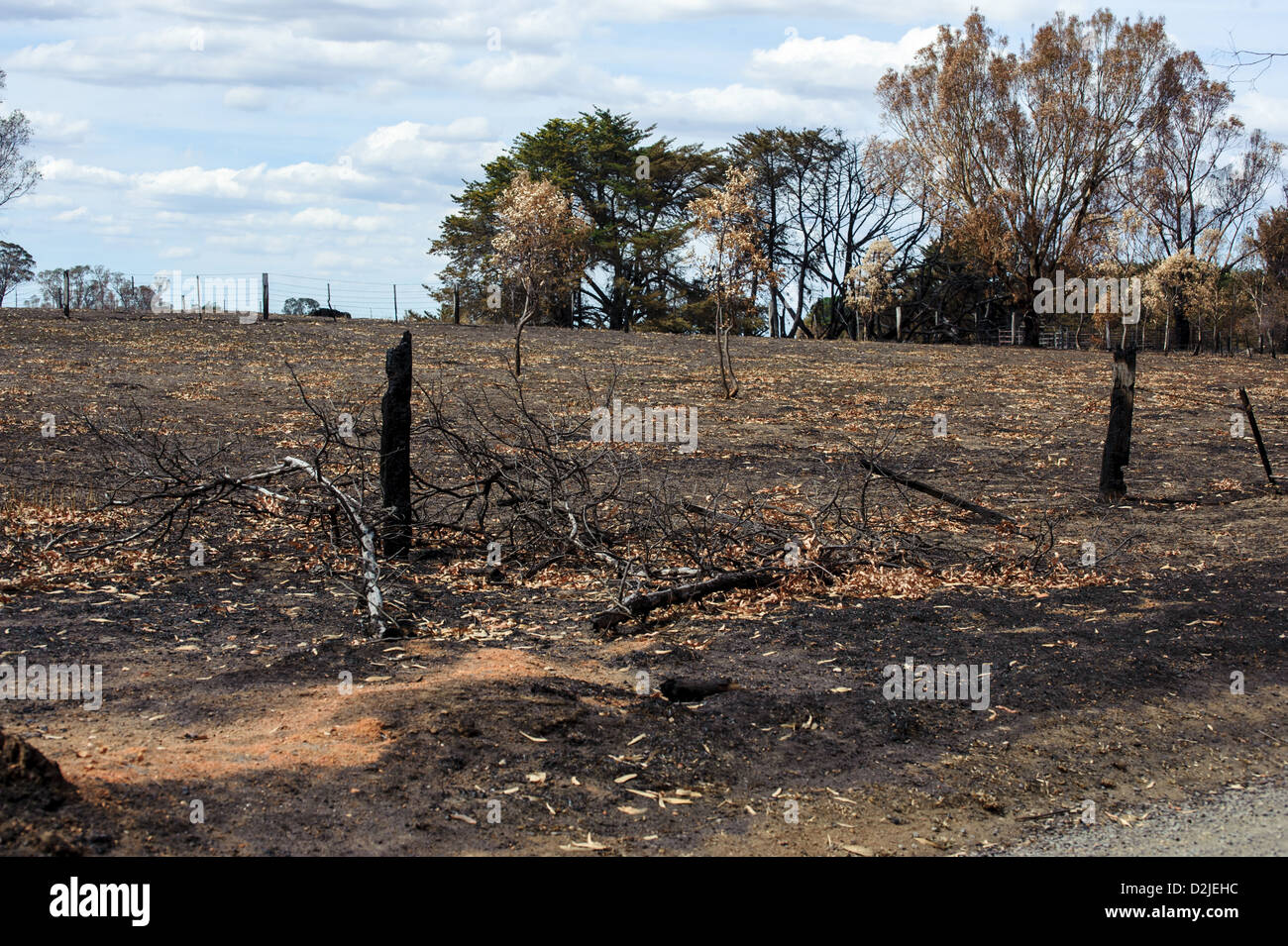 Fire damage from the Victorian Bushfires of 2009 was widespread - Stock Image