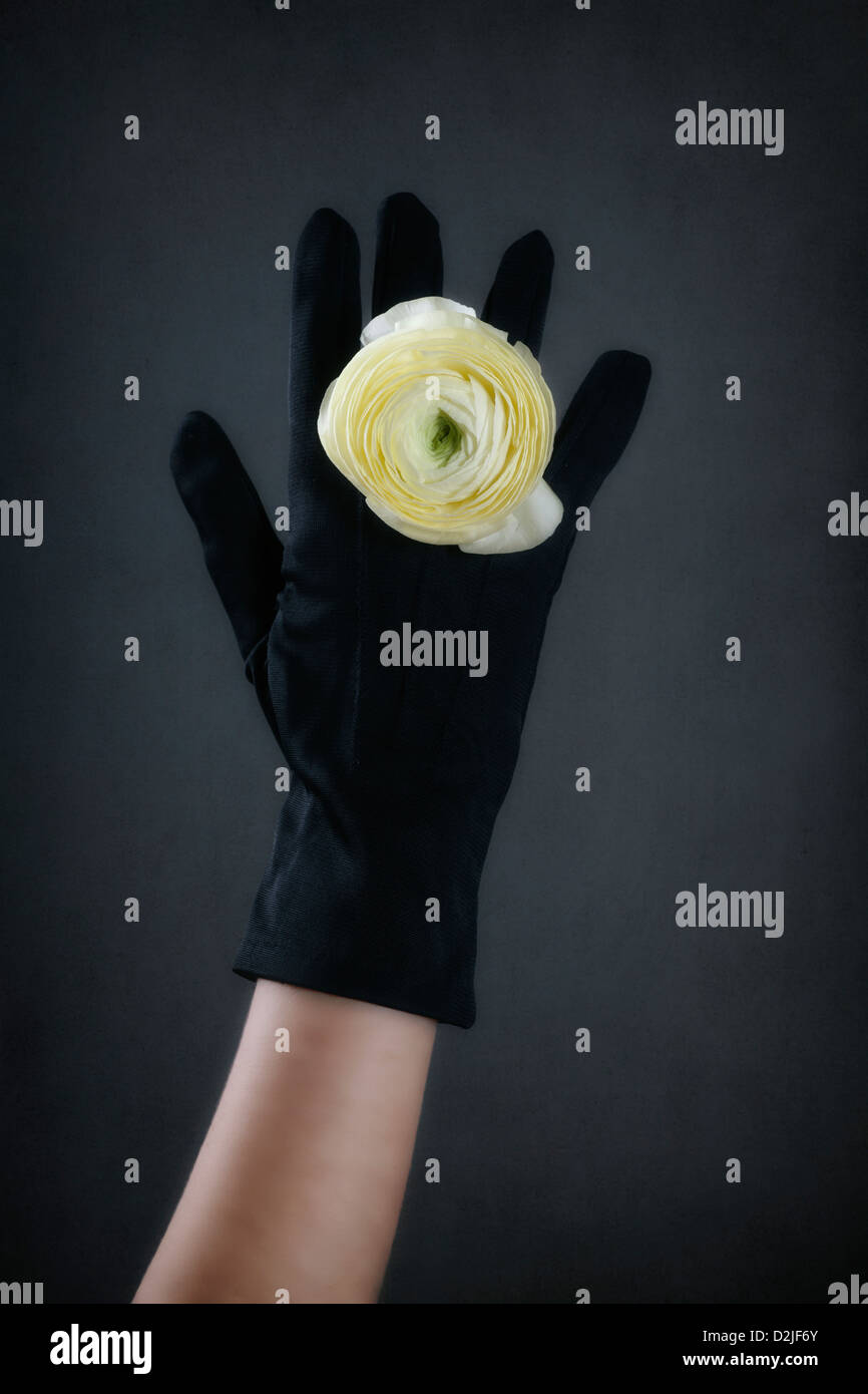 a hand in a black glove with a ring made out of a yellow buttercup flower - Stock Image