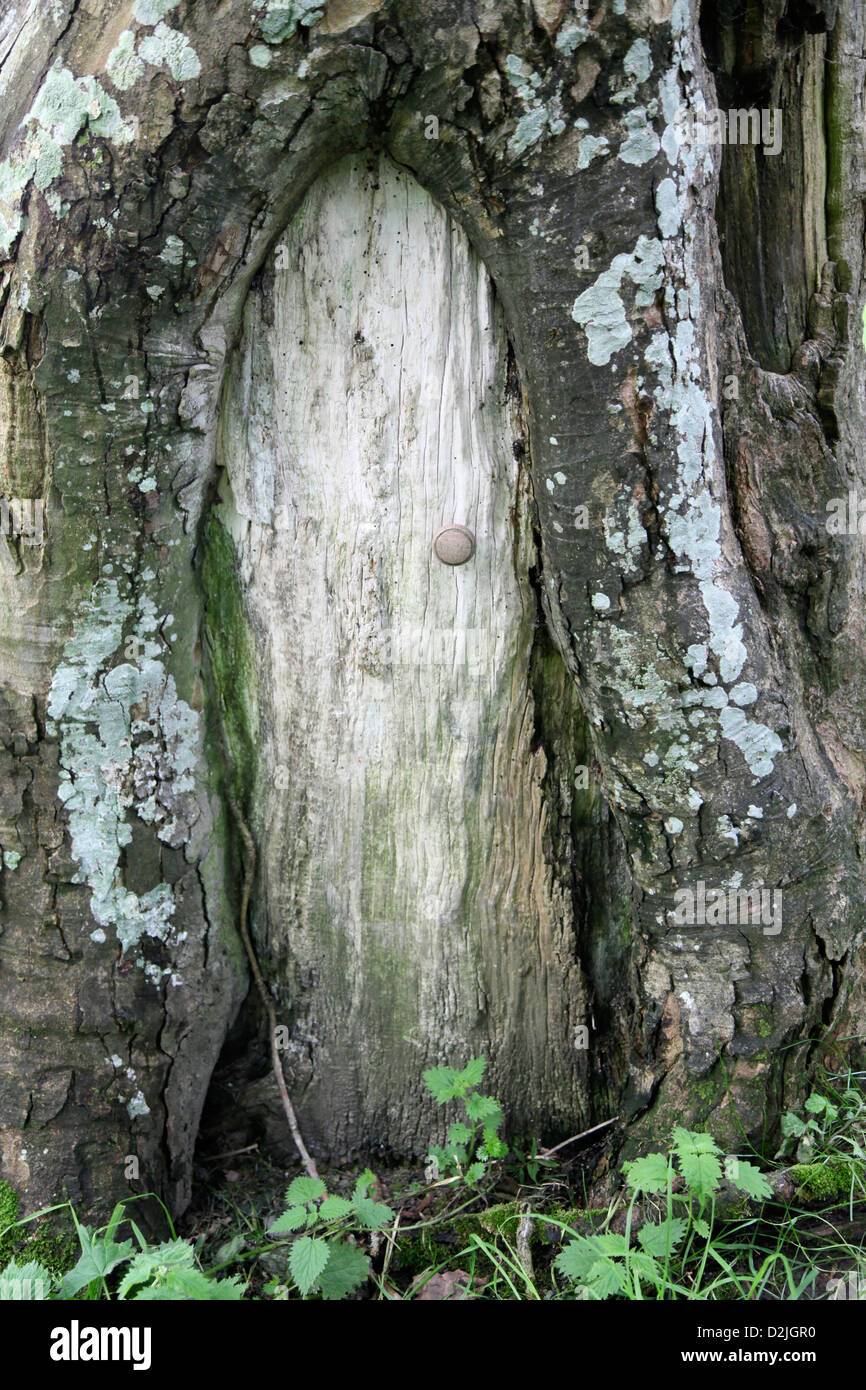 A little tree door in the Lake District : tree door - pezcame.com