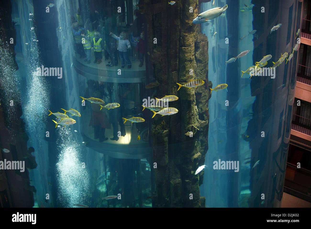 Berlin, Germany, fish in Aquadom the Sealife - Stock Image