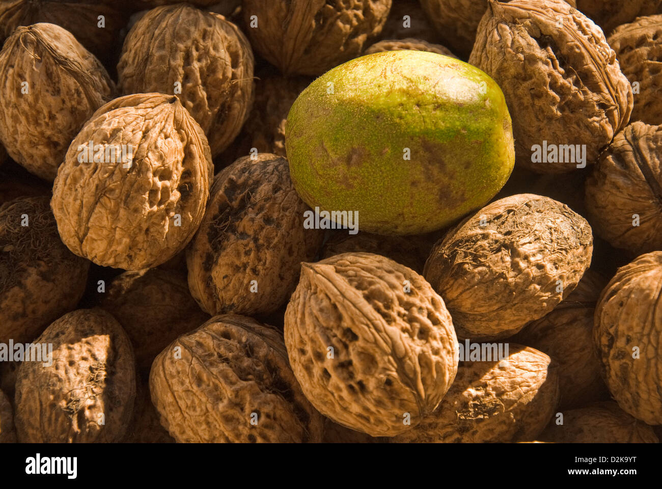 Close-up of harvested walnuts - Stock Image