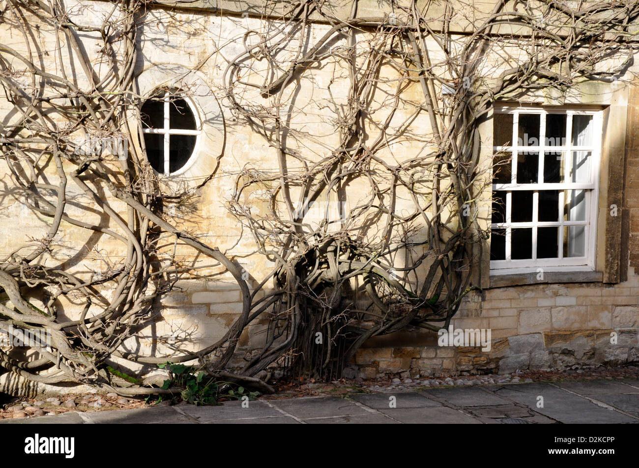 House with vine in Woodstock, Oxfordshire, England, UK - Stock Image