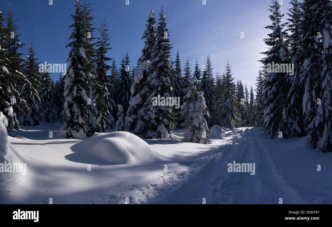 Nearing the end of the loop in Ray Benson Sno-Park at the top of Santiam Pass in Oregon, U.S.A. - Stock Image