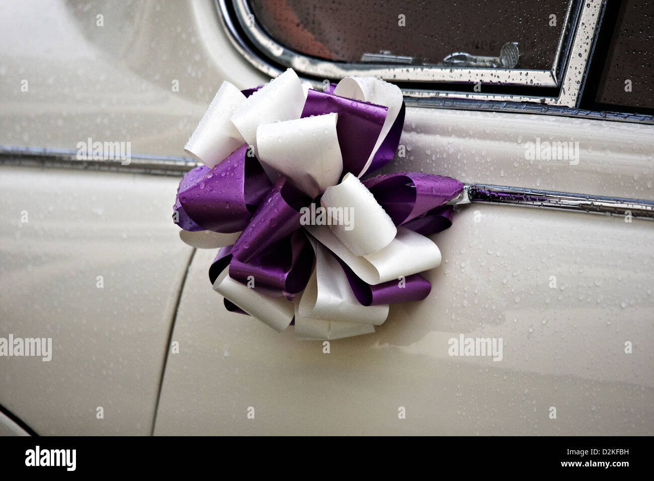 Purple and white ribbon wedding bow attached to white wedding car - Stock Image
