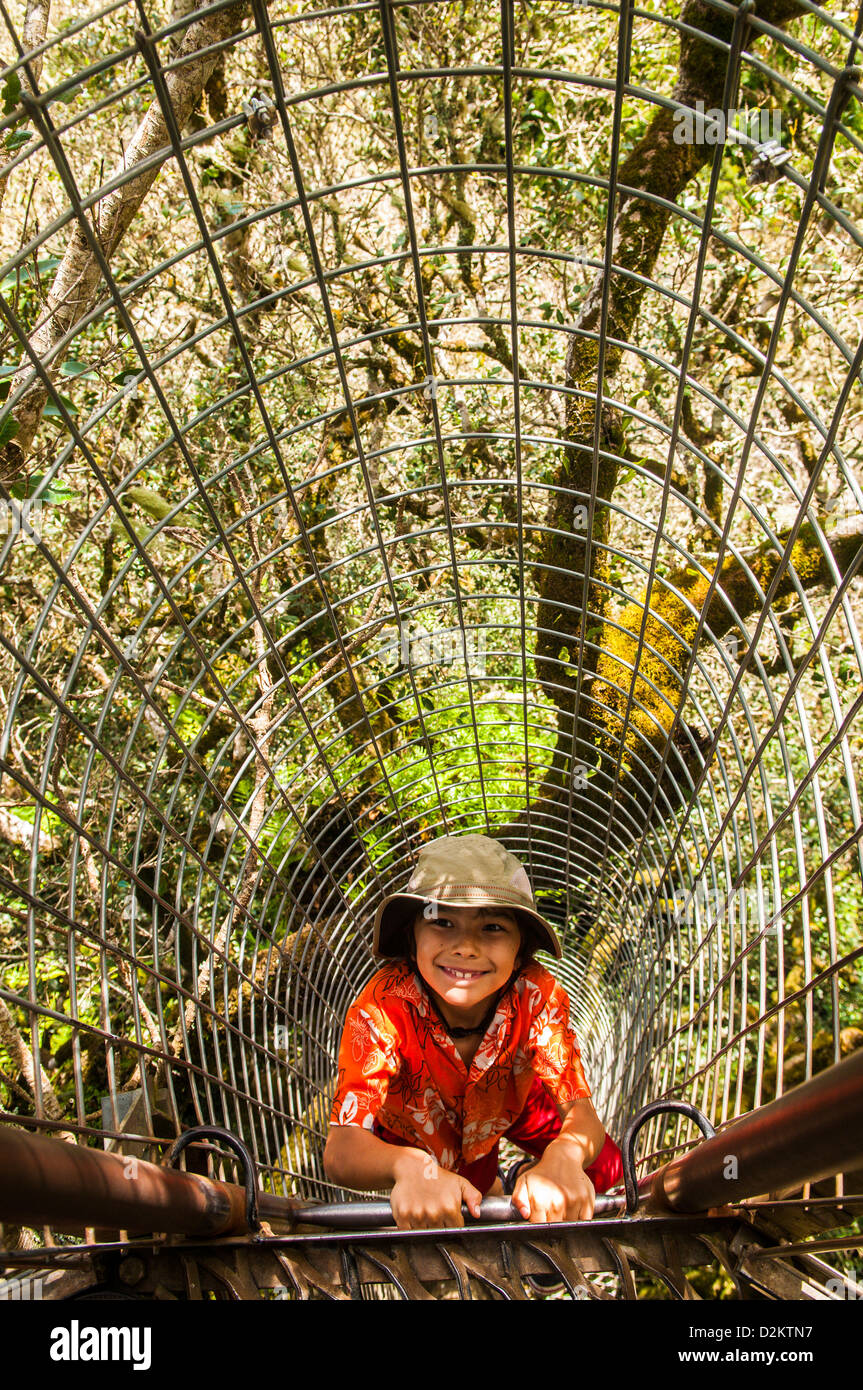 Young boy on Tree Top Walk, O'Reilly's, Lamington National Park, Queensland, Australia - Stock Image