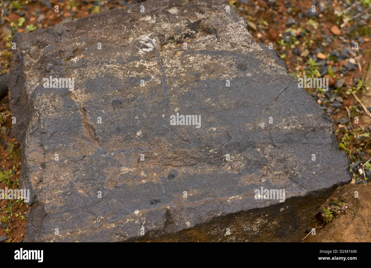 Chert, a fine-grained silica-rich sedimentary rock. South Africa - Stock Image