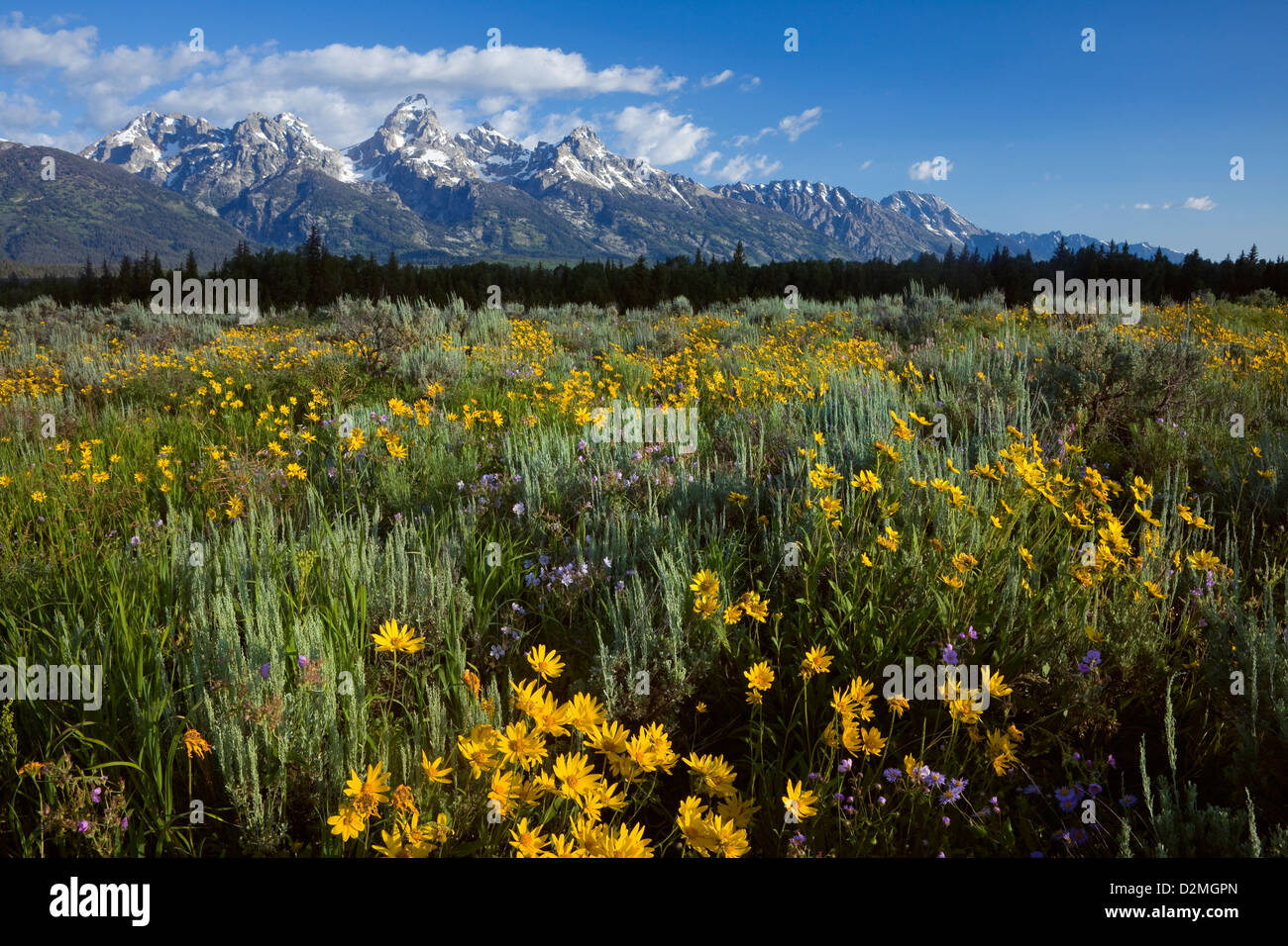 WY00298-00...WYOMING - View of the Teton Range from Blacktail Ponds Overlook in Grand Teton National Park. - Stock Image