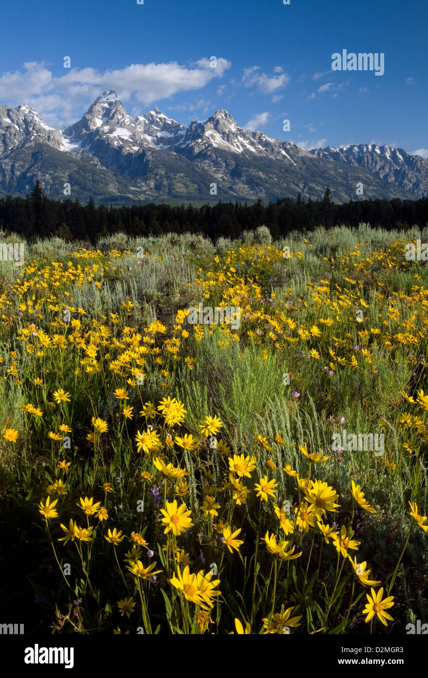 WY00300-00...WYOMING - View of the Teton Range from Blacktail Ponds Overlook in Grand Teton National Park. - Stock Image