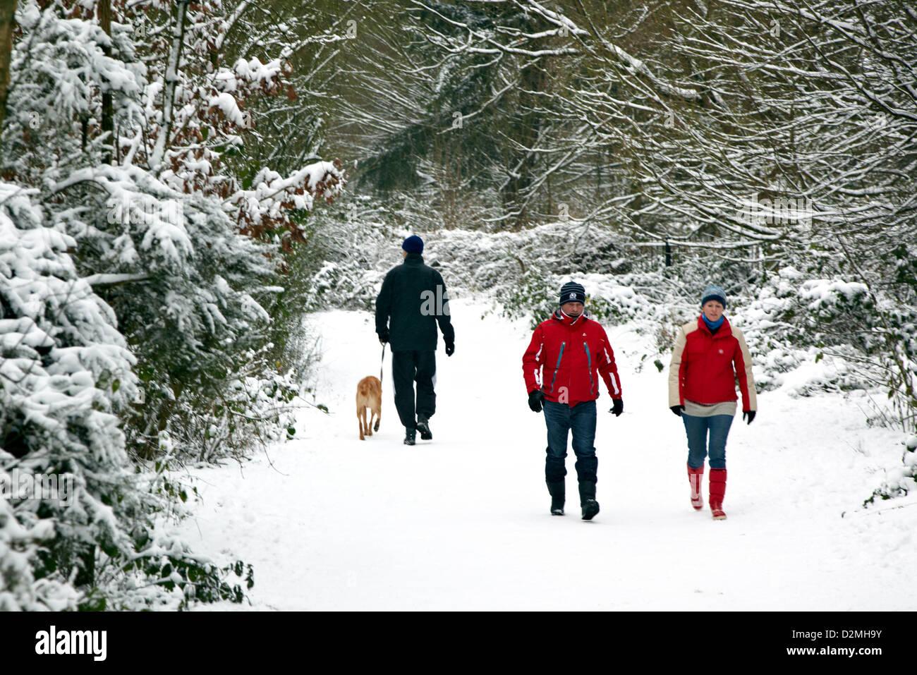 Winter On Hampstead Heath London UK - Stock Image