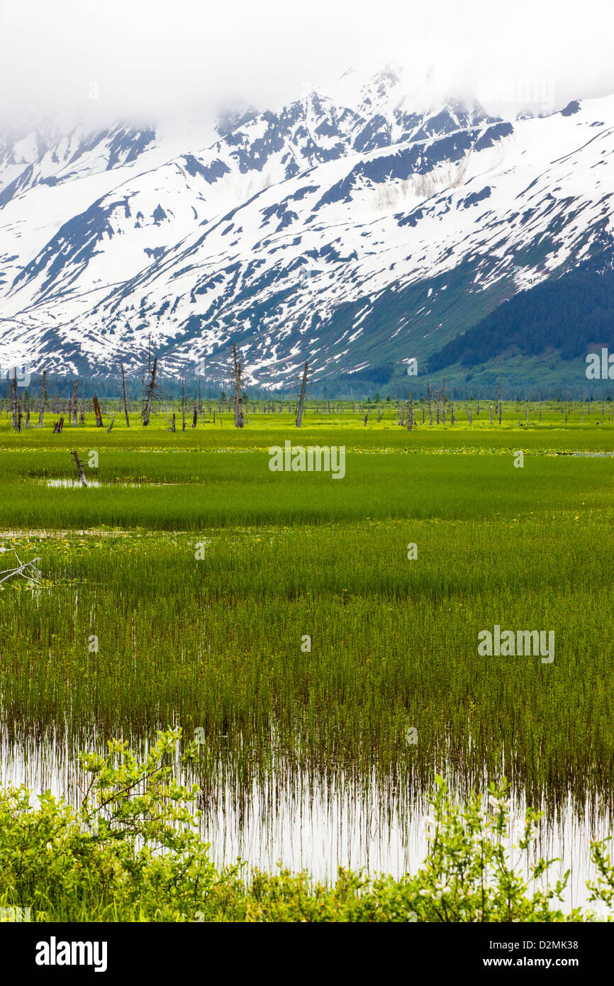 Marsh grass along the southern tip of Turnagain Arm, near Portage, Alaska, USA. Snow covered Chugach Mountains beyond. - Stock Image