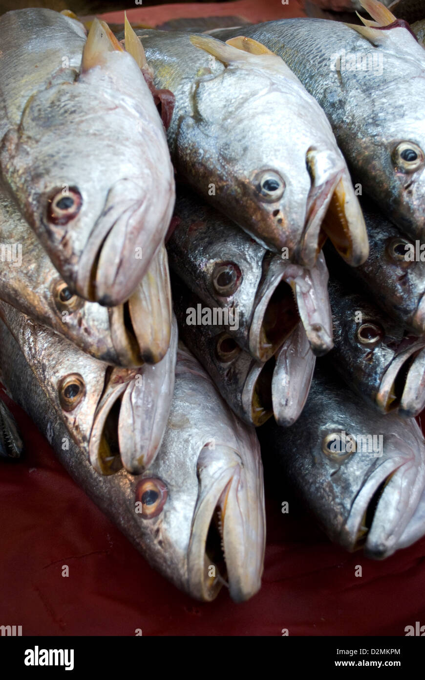 Locally caught fresh fish on sale at the Mercado in old Mazatlan,Mexico. - Stock Image