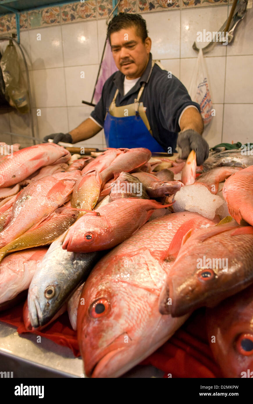 Fish market at the Mercado in old Mazatlan,Mexico with various locally caught fish. - Stock Image