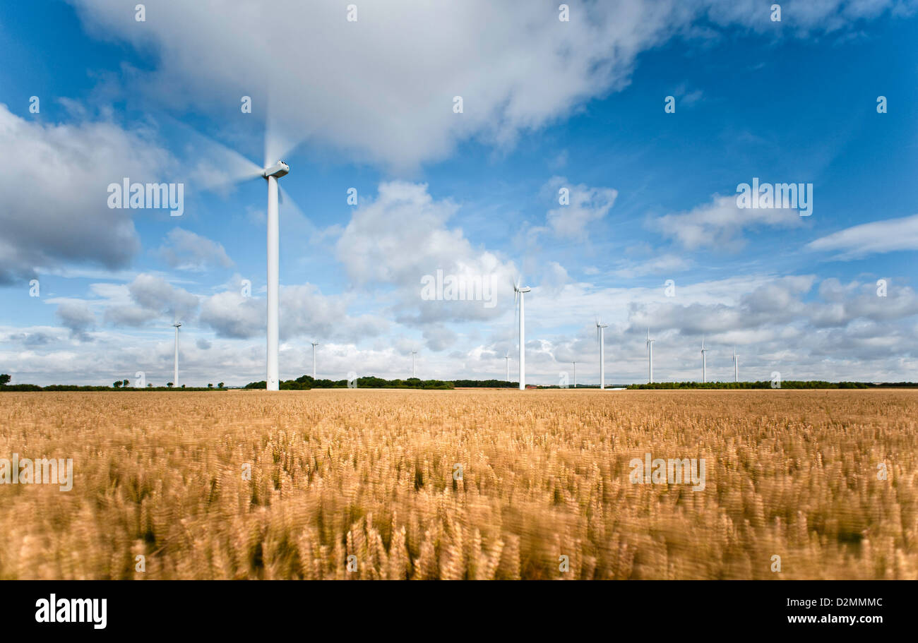 Wind farm in wheat field on a fine summer's morning, Bridlington, Beverley, Yorkshire, UK. - Stock Image