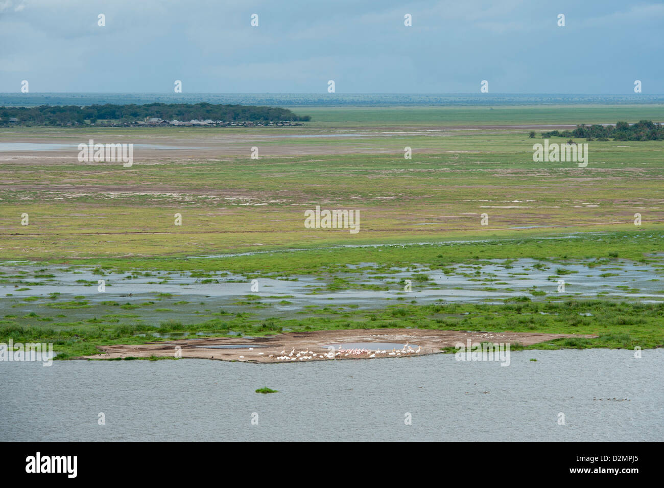 Pelicans and flamingos at the marsh, Amboseli National Park, Kenya - Stock Image