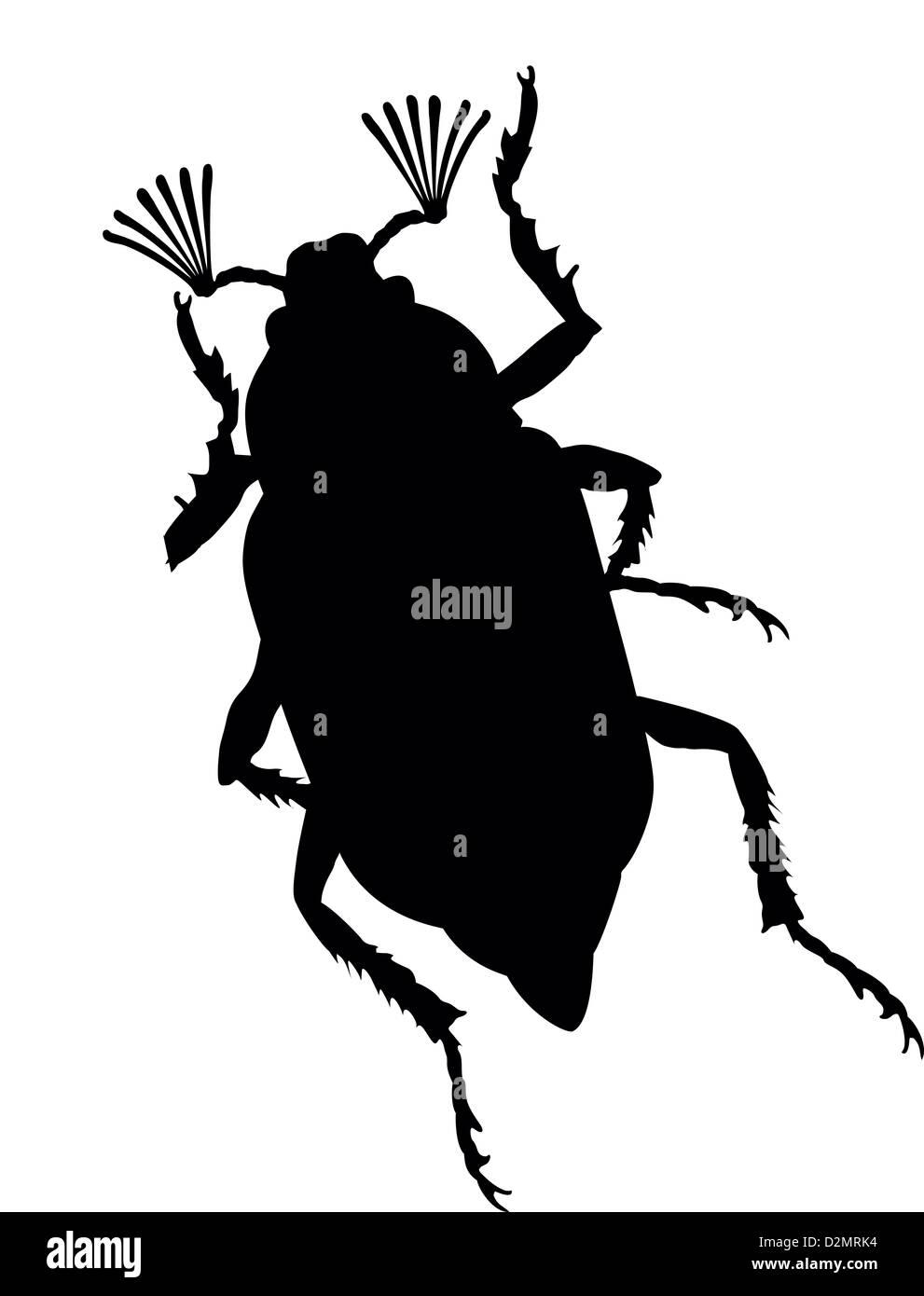 Maybug vector silhouette. Stock Photo