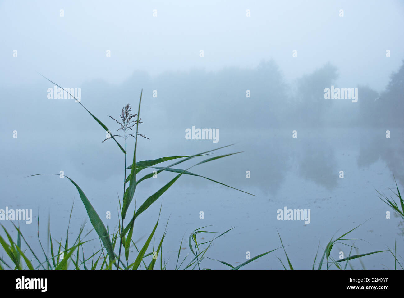Calm minimal misty view across a pond in early morning - Stock Image