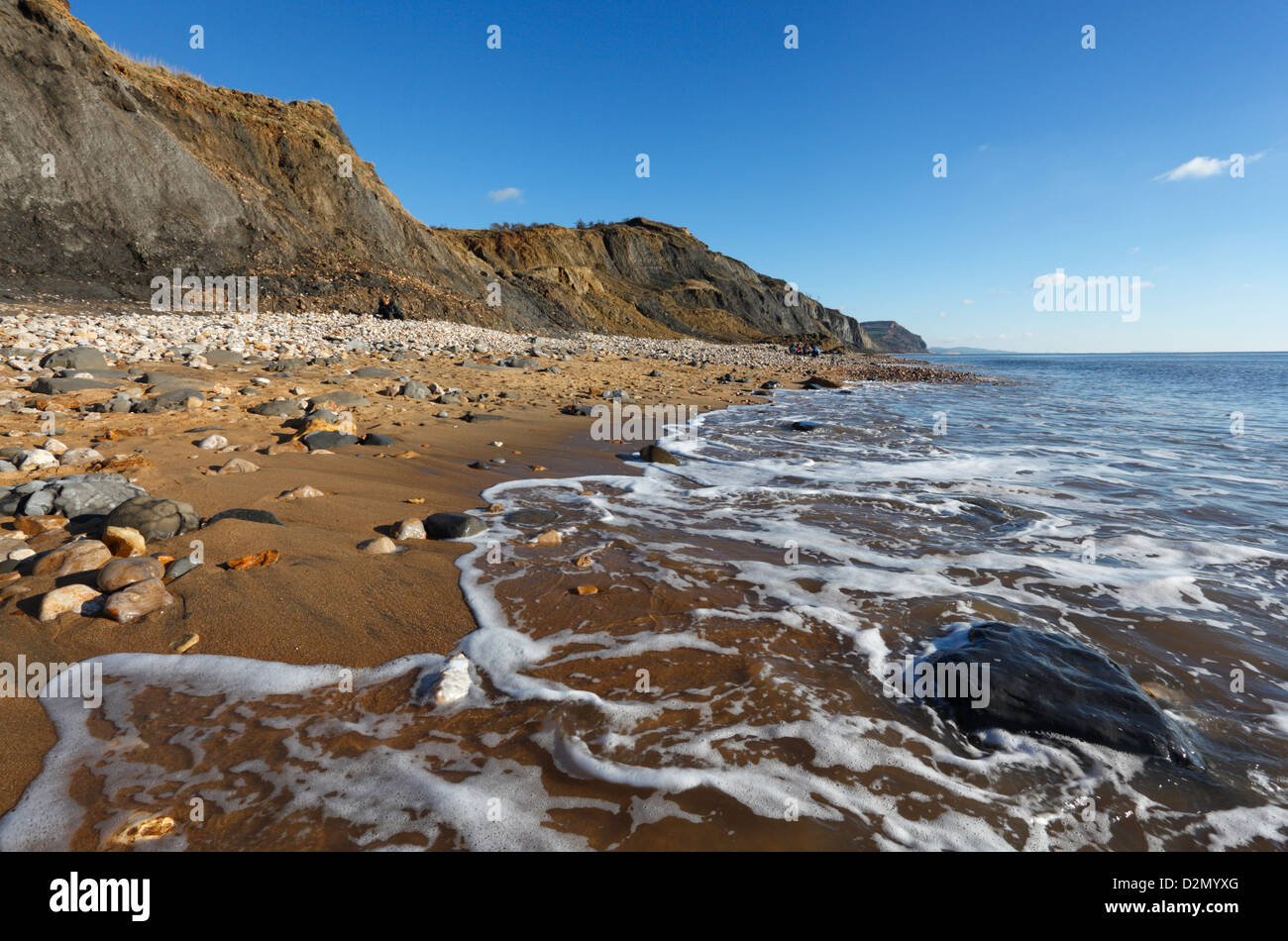 Fossil Rich cliffs at Charmouth Beach. Jurassic Coast World Heritage Site. Dorset. England. UK. - Stock Image