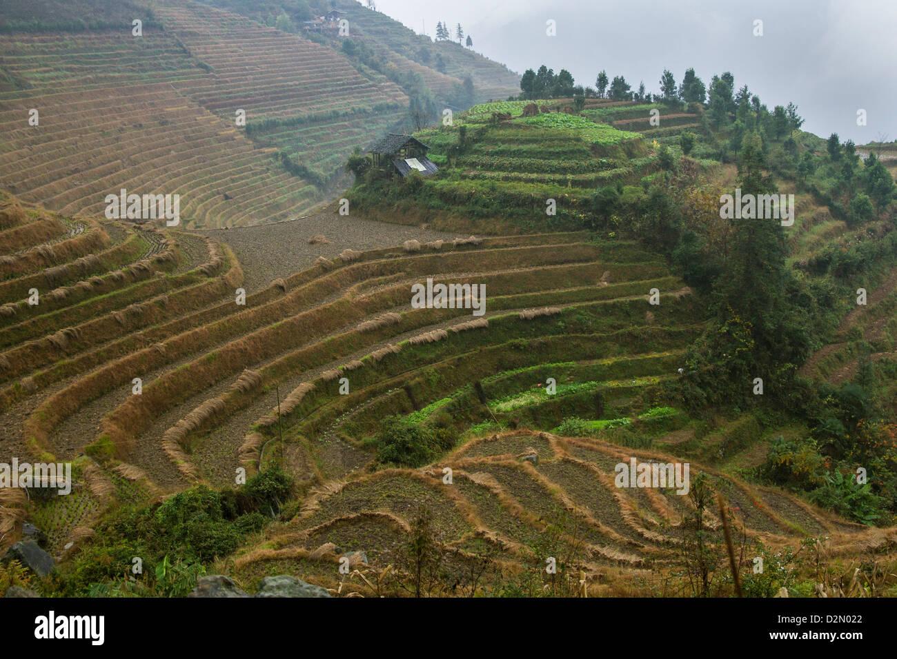 Rice terraces, Longji, Guangxi, China, Asia - Stock Image