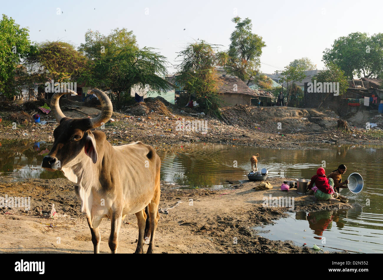 Washing vessels in stagnant water of pond also used by cattle, behind houses, Gujarat, India, Asia - Stock Image