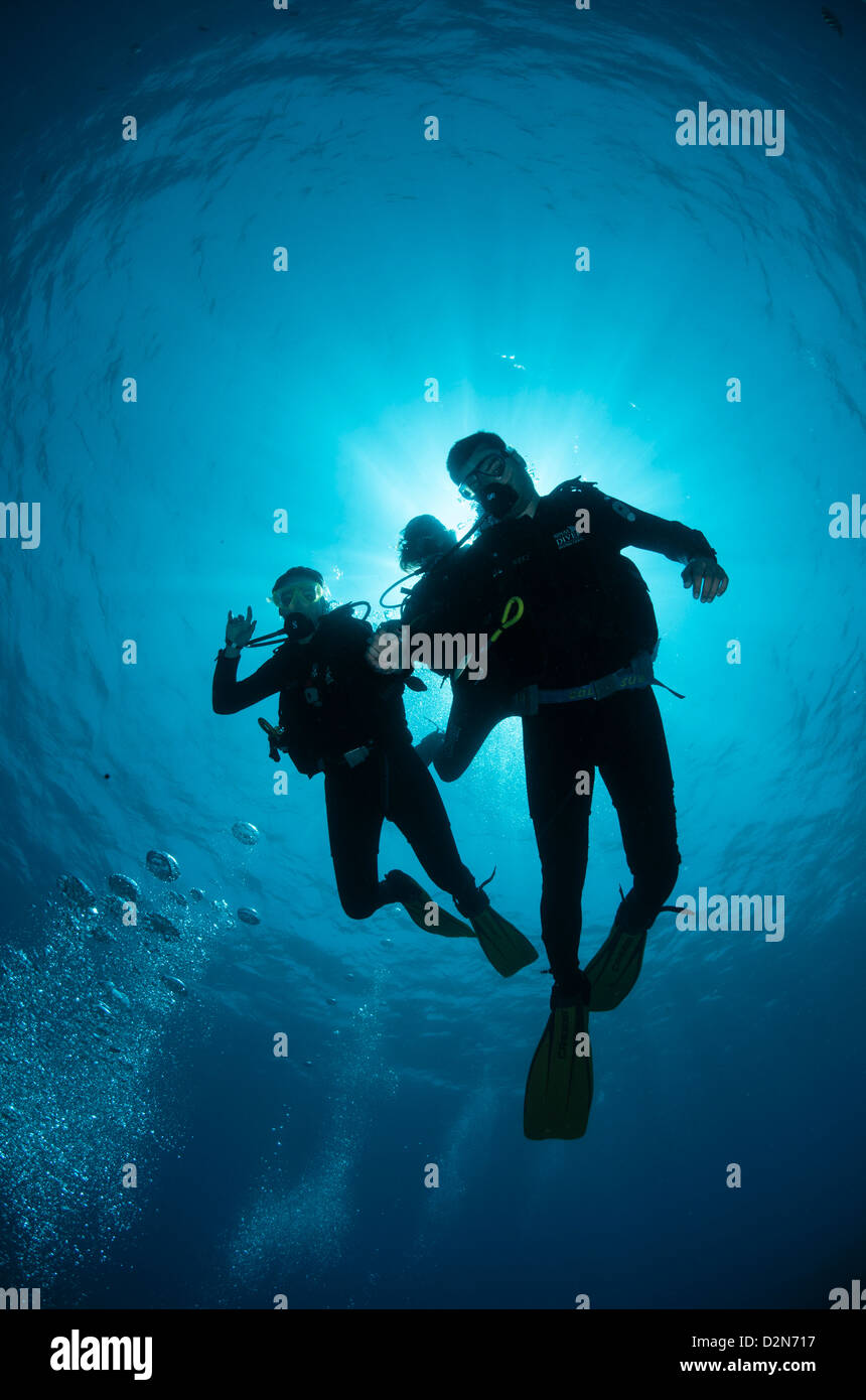 Low angle view of three scuba divers, backlit, Sharm El Sheikh, South Sinai, Red Sea, Egypt, North Africa, Africa - Stock Image