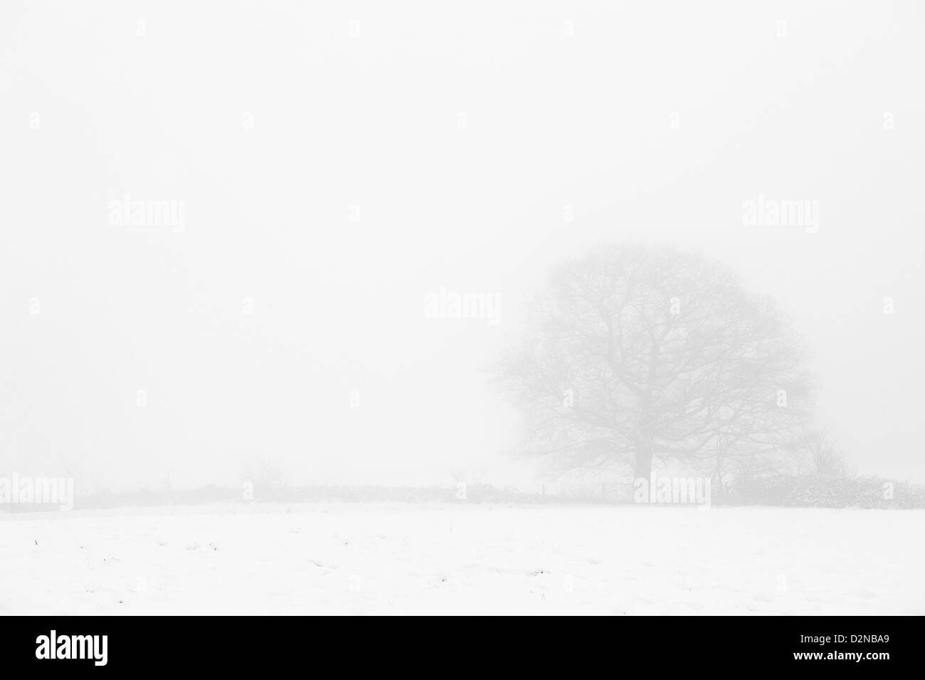 Freezing fog and snow in Essex - Stock Image