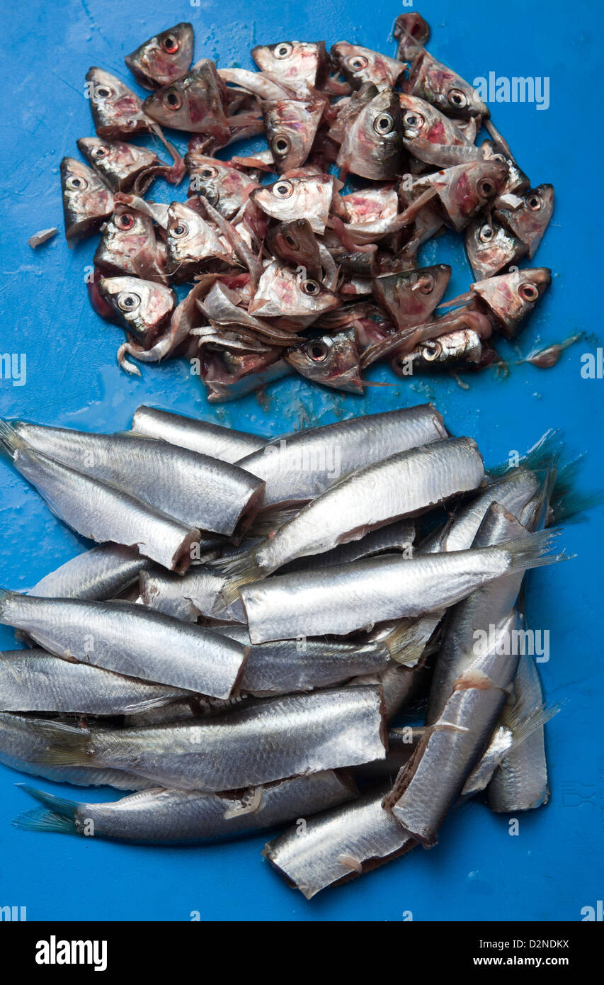 Fresh Sprats on chopping board gutted and with heads removed - Stock Image