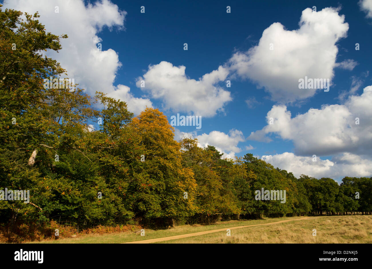Early Autumn with cloudscape - Stock Image
