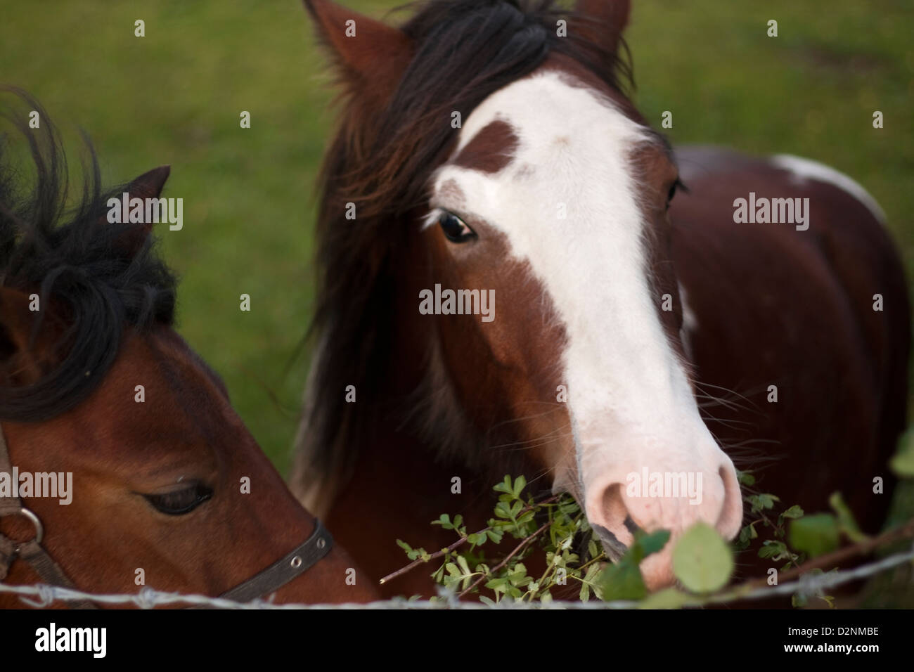 horses1 - Stock Image