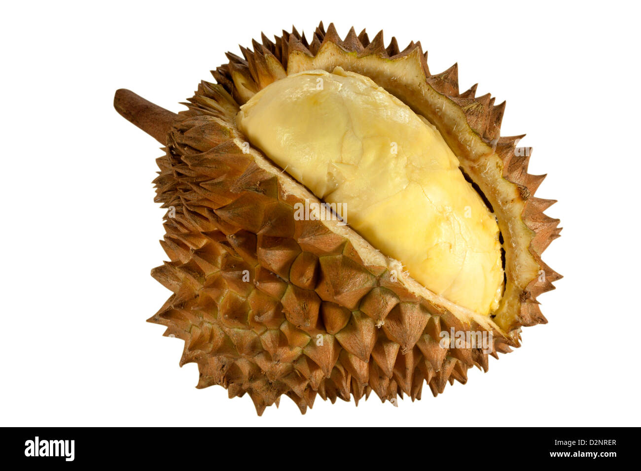 Durian fruit smells sweet with high carbohydrates. - Stock Image