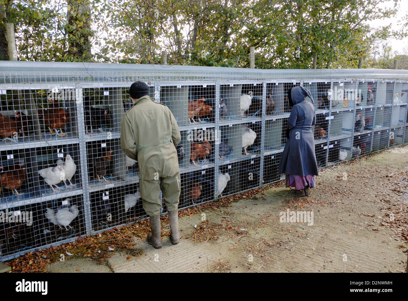 Caged poultry at a poultry sale, Wales - Stock Image