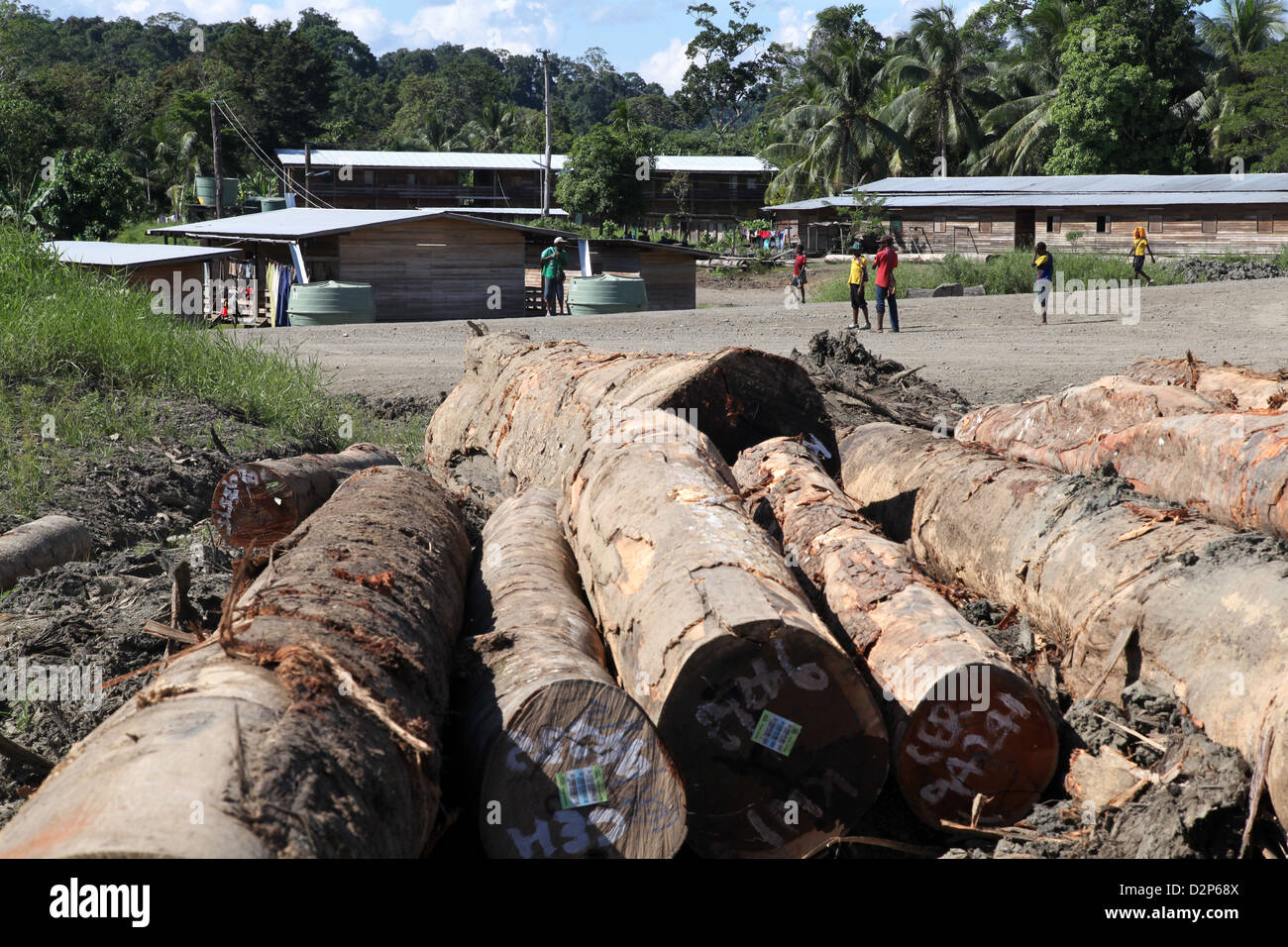 Tree trunks near a logging workers village in Madang province, Papua New Guinea - Stock Image