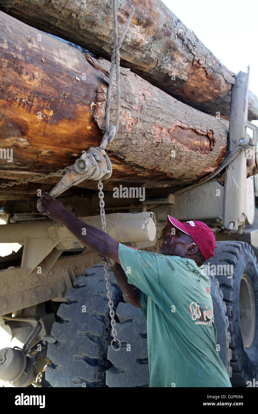 Tree trunks loaded on a lorry in the logport of Logpont Timbers Rimbunan Hijau (PNG) Limitid in Garim, Madang, Papua - Stock Image