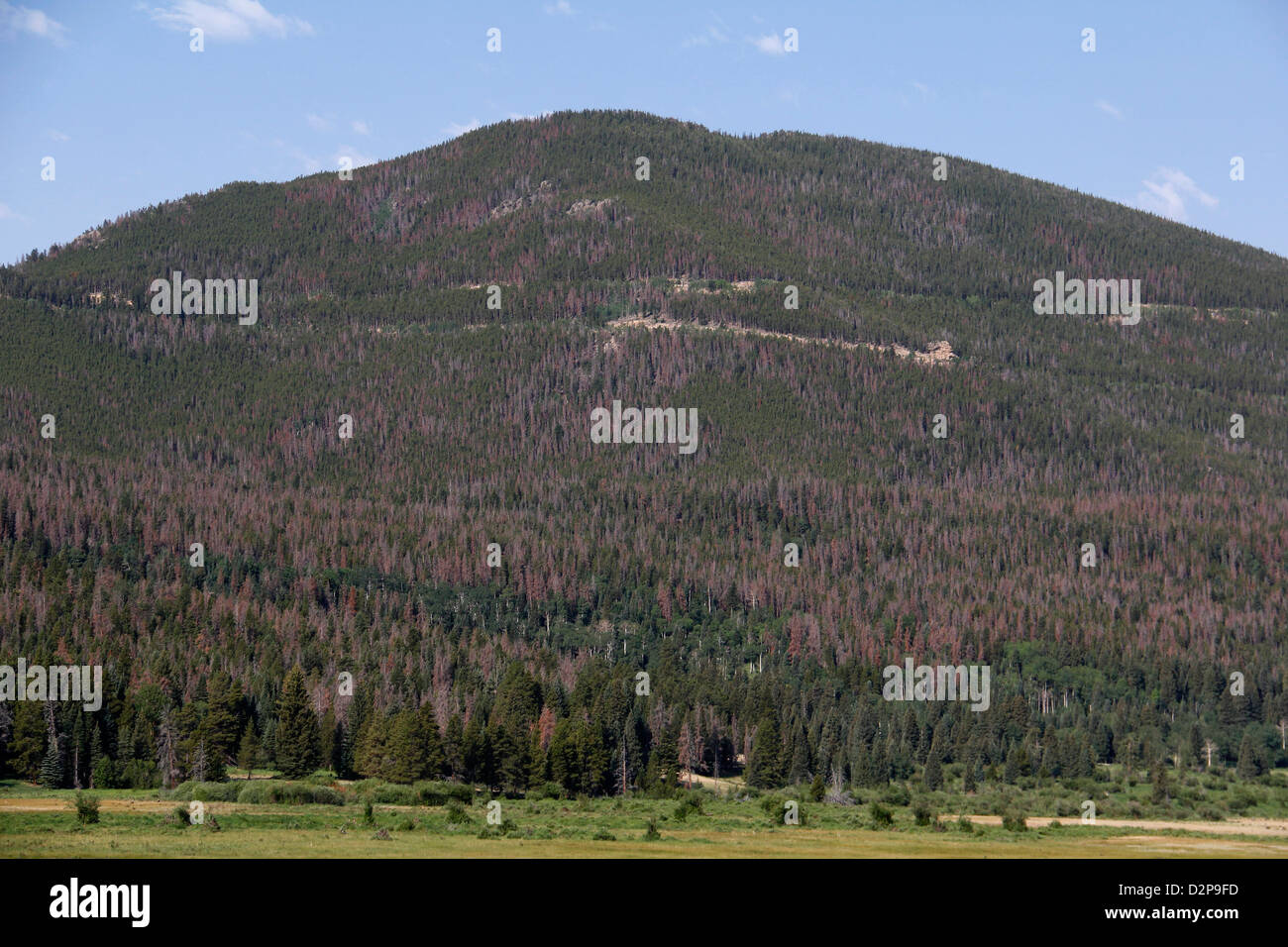 Dead pine trees from Pine Beetle Epidemic Rocky Mountain National Park - Stock Image