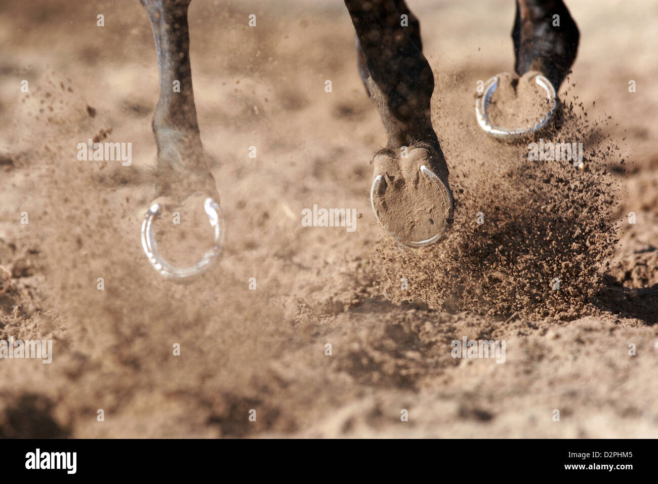 Neuenhagen, Germany, Detail, hooves galloping on sand - Stock Image