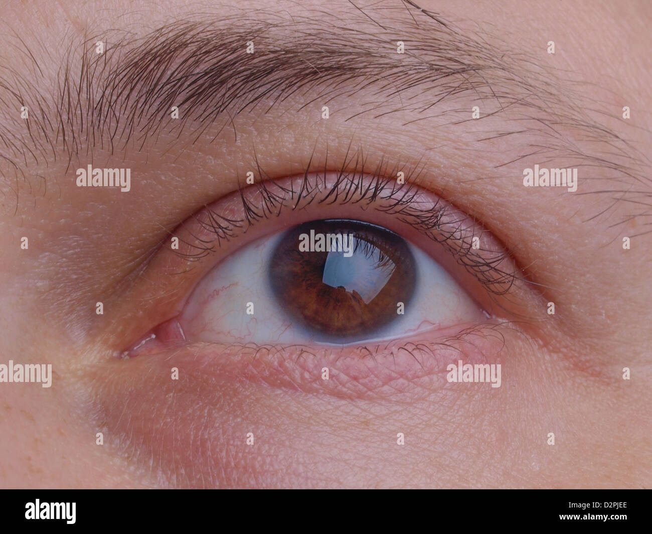 Close detail of an eye pupil and eyelids - Stock Image