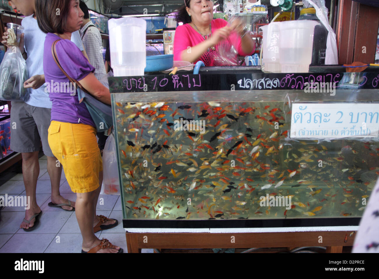 Fish for sale in pet zone at Chatuchak Weekend Market , Bangkok
