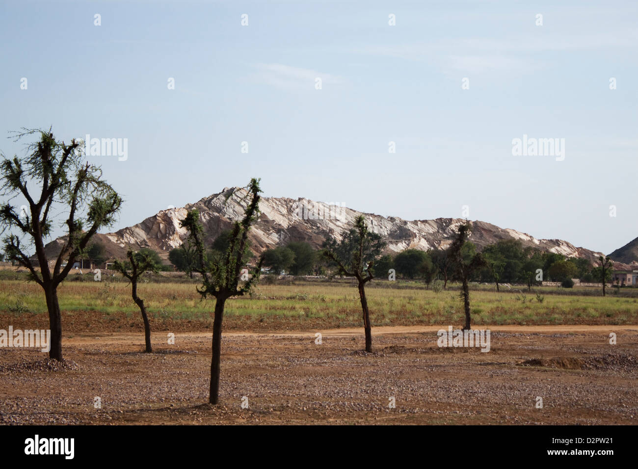 Tree with a mountain range, Ahmedabad, Gujarat, India - Stock Image