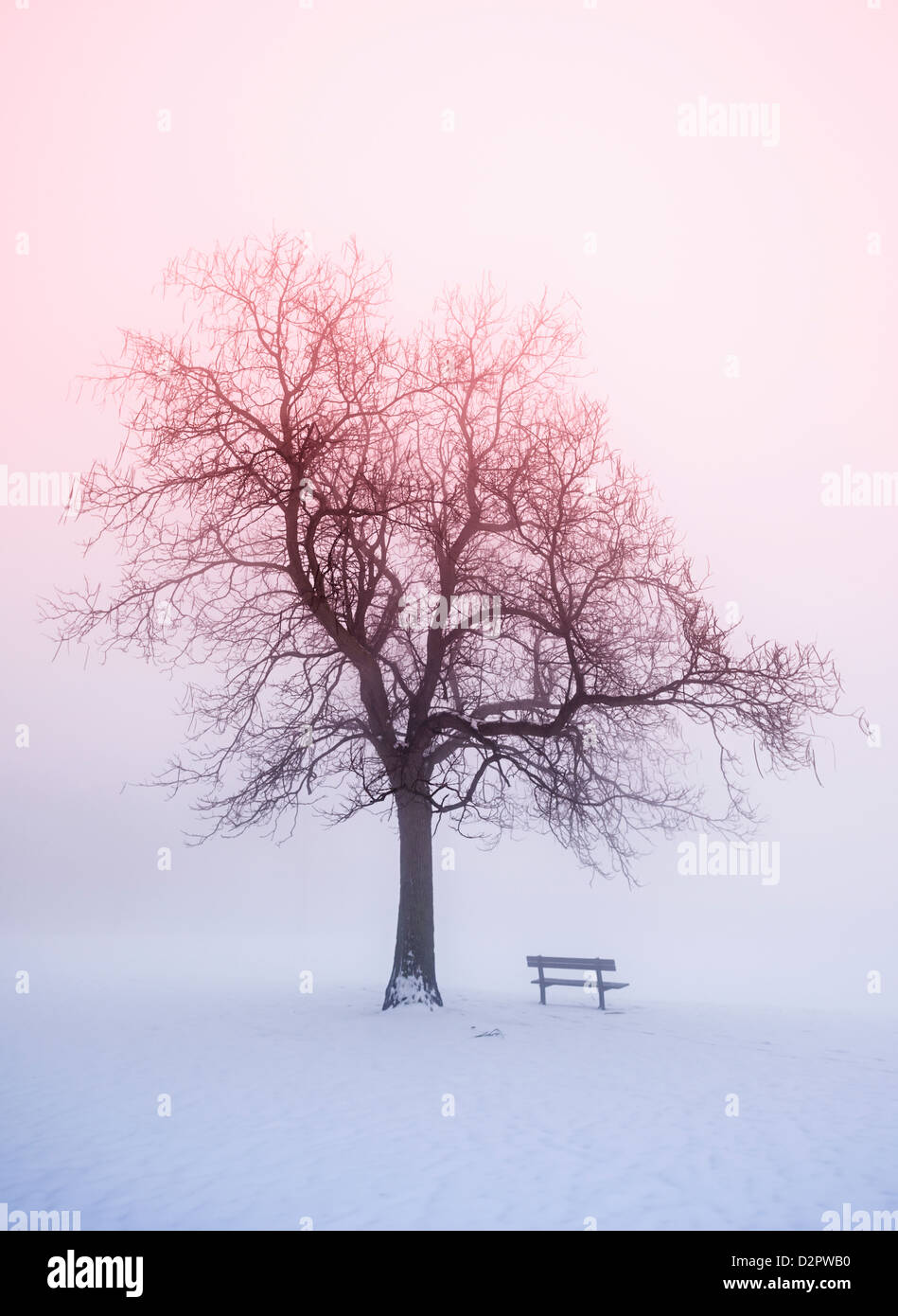 Foggy winter sunrise scene with leafless tree and park bench - Stock Image