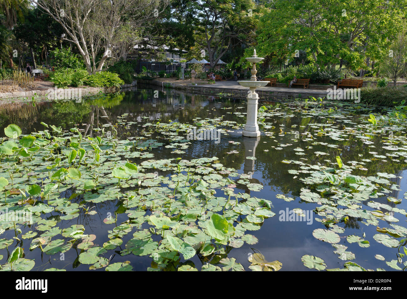 Royal Botanic Gardens, Sydney, New South Wales, Australia, Pacific Stock Photo