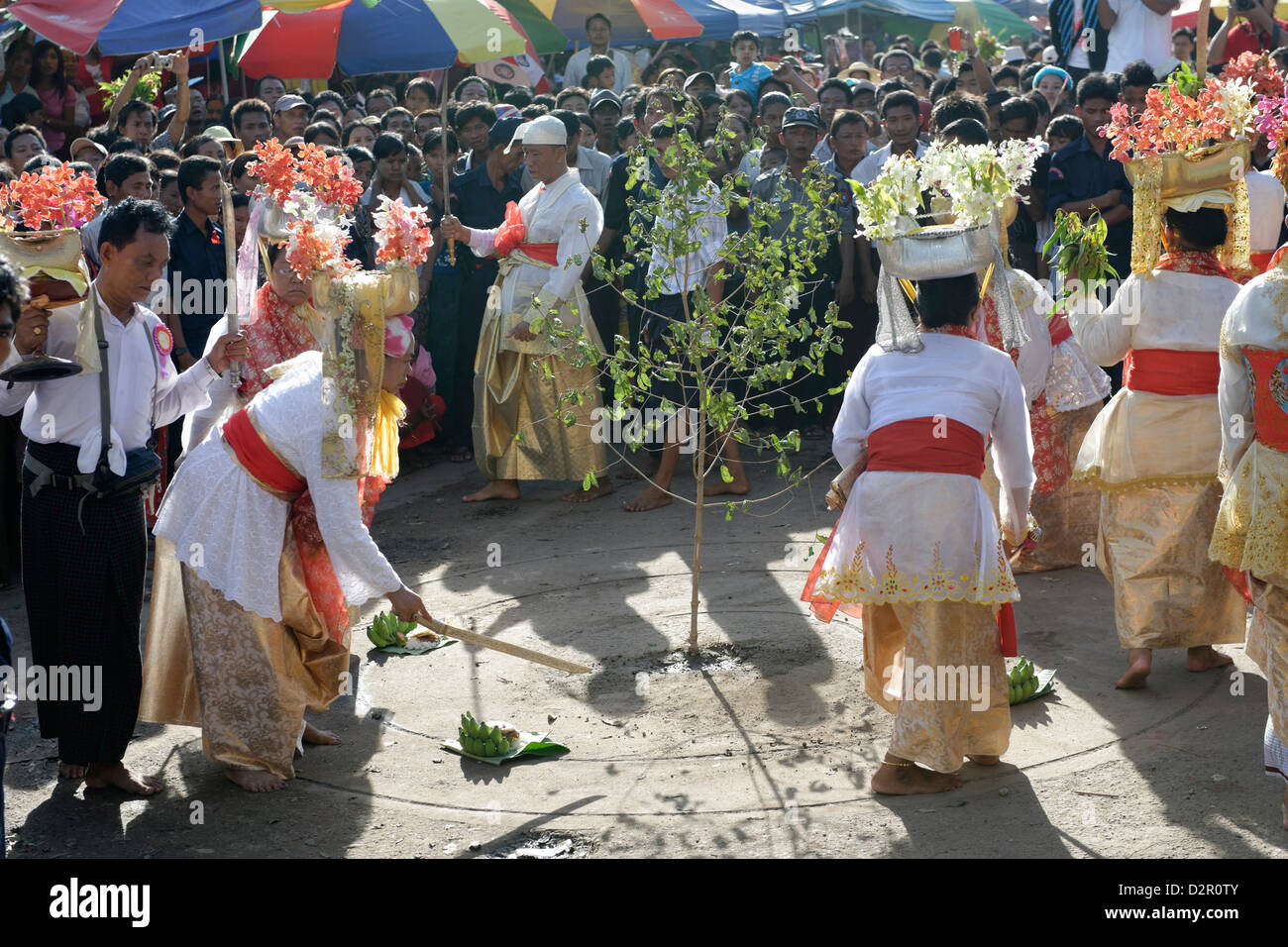 Felling trees ceremony (htein pin) at the biggest Nat ritual (Festival of Spirits) in Taungbyon, Mandalay Division, - Stock Image