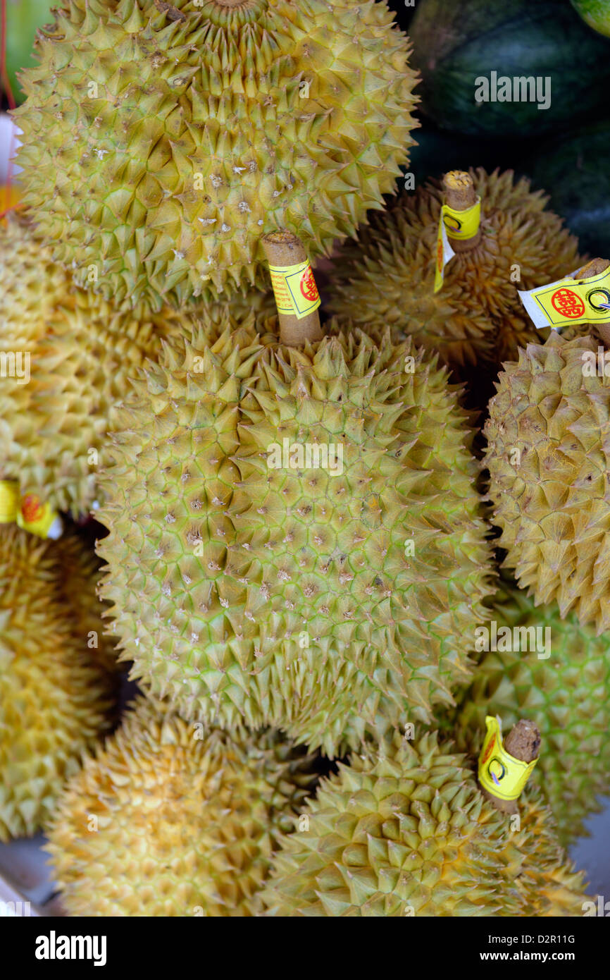 The durian, fruit of several tree species belonging to the genus Durio and the Malvaceae family, Myanmar Stock Photo