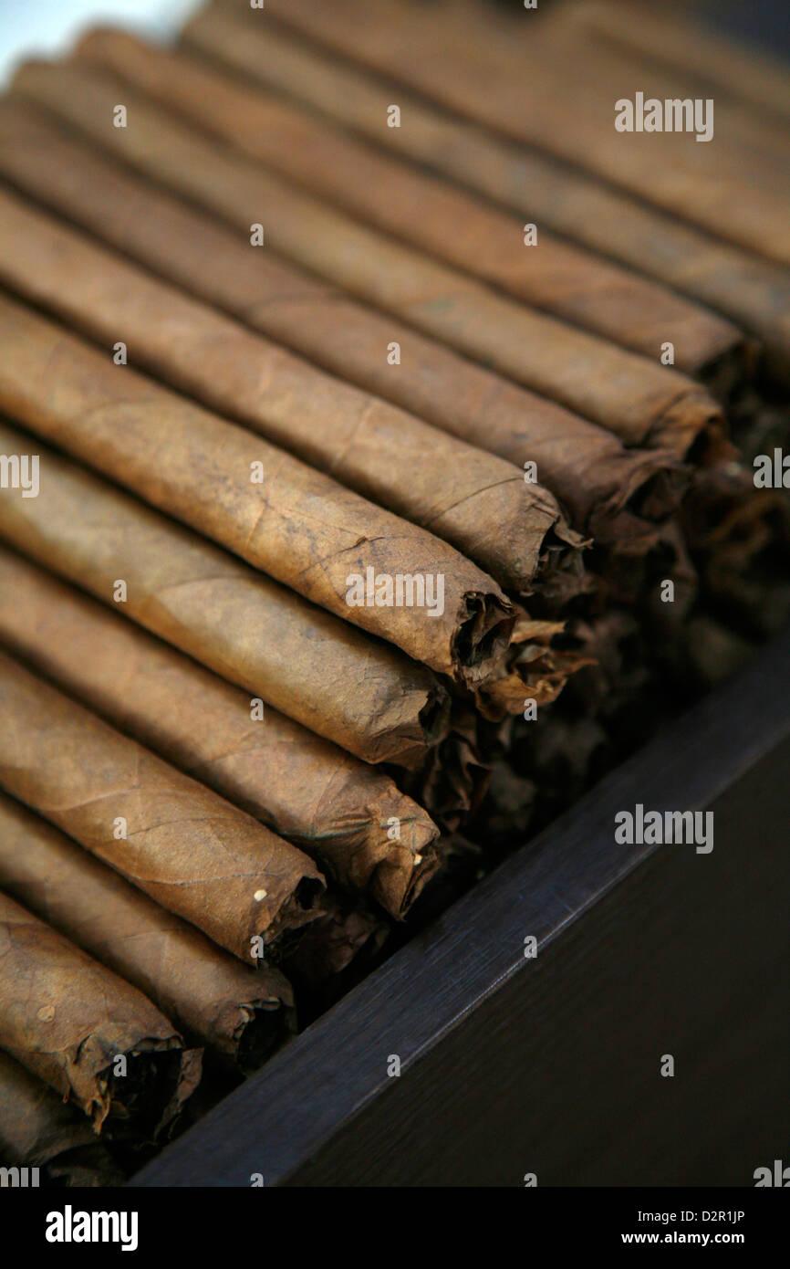 Cigars at the Dannemann factory in Sao Felix, Bahia, Brazil, South America - Stock Image