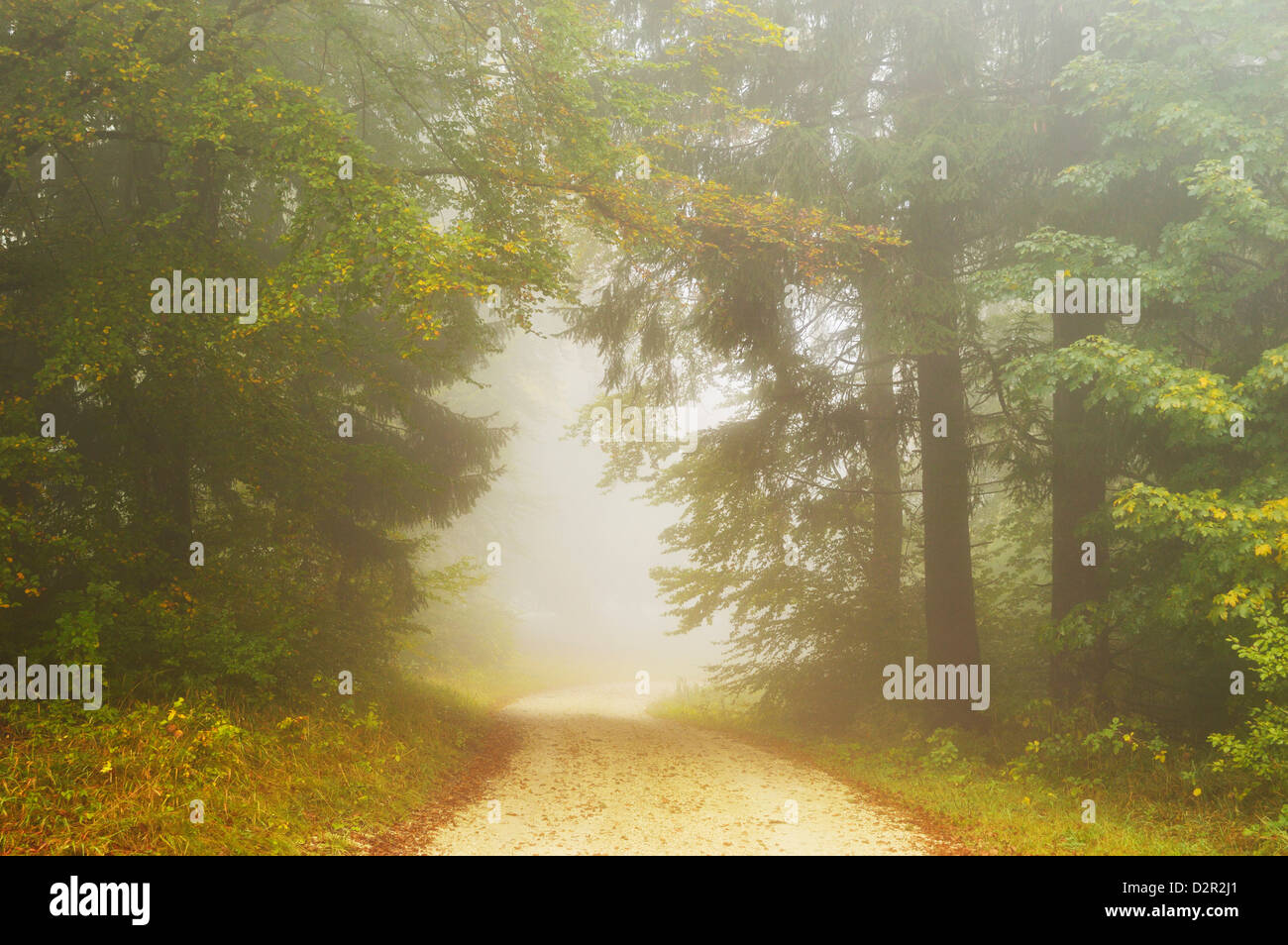 Autumn scene in morning fog, Swabian Alb, Baden-Wurttemberg, Germany, Europe - Stock Image